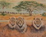 Африка. Львы.